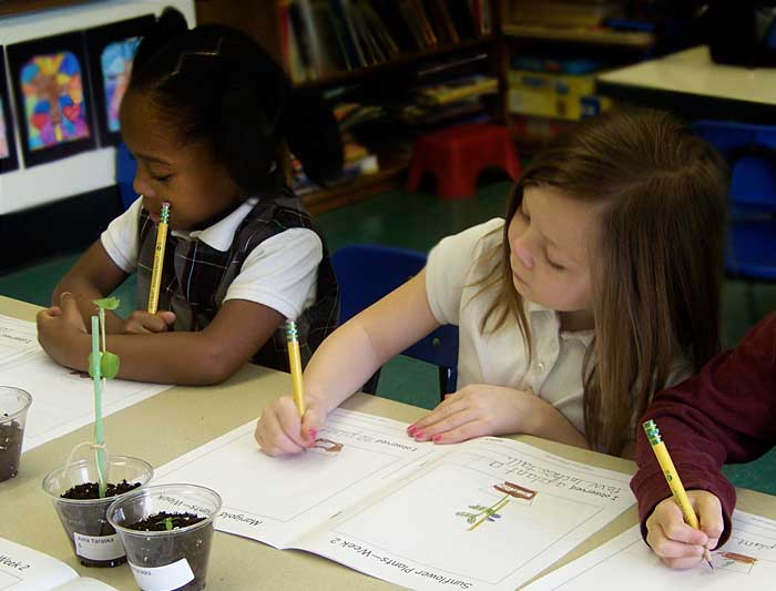 Children studying plants