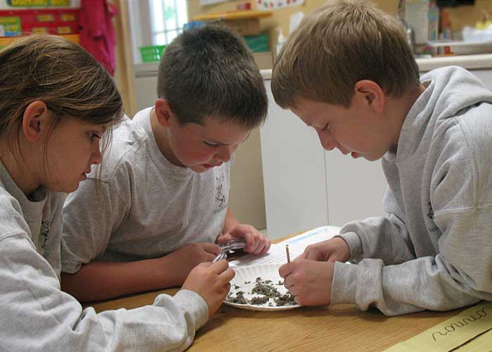 Kids dissecting owl pellets