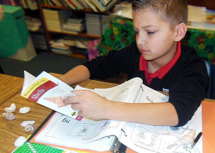 Science 4 - Boy looking at shells