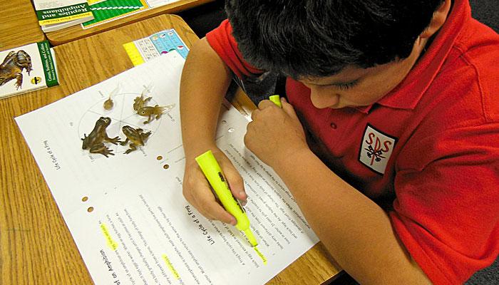 Student studying amphibians