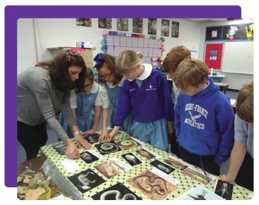 Students study animal skeletons with teacher