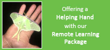 Nancy Larson Science Remote Learning Package